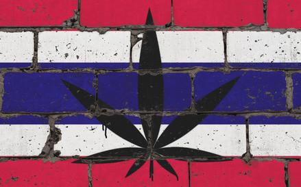 Thai-Cannabis
