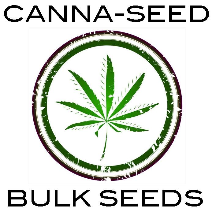 Canna Seed Bulk Seeds