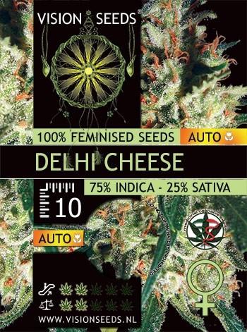 Gaudas Grass Auto before Delhi Cheese Auto