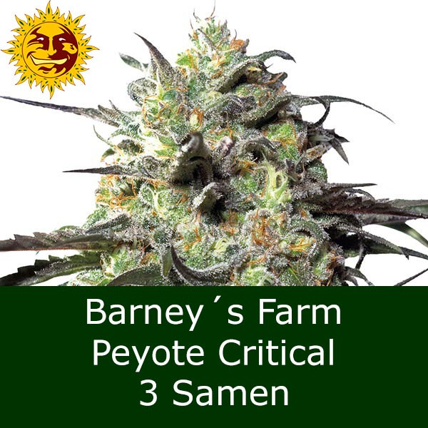 3 Seeds Peyote Critical - BF Bonus