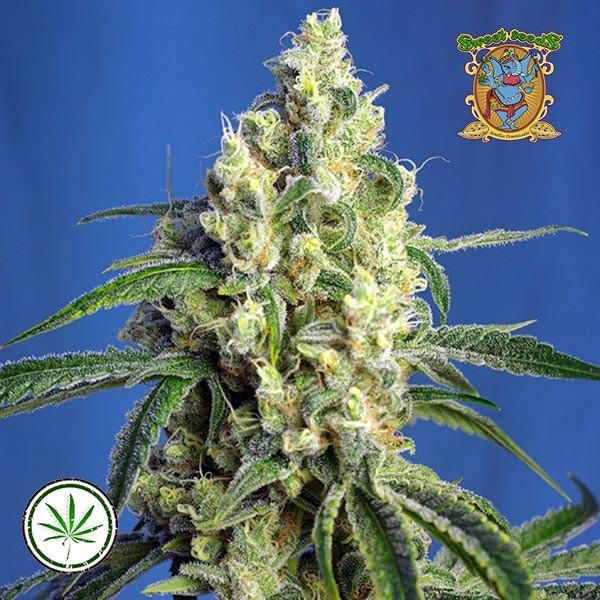 Green Poison CBD