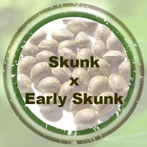 Skunk x Early Skunk